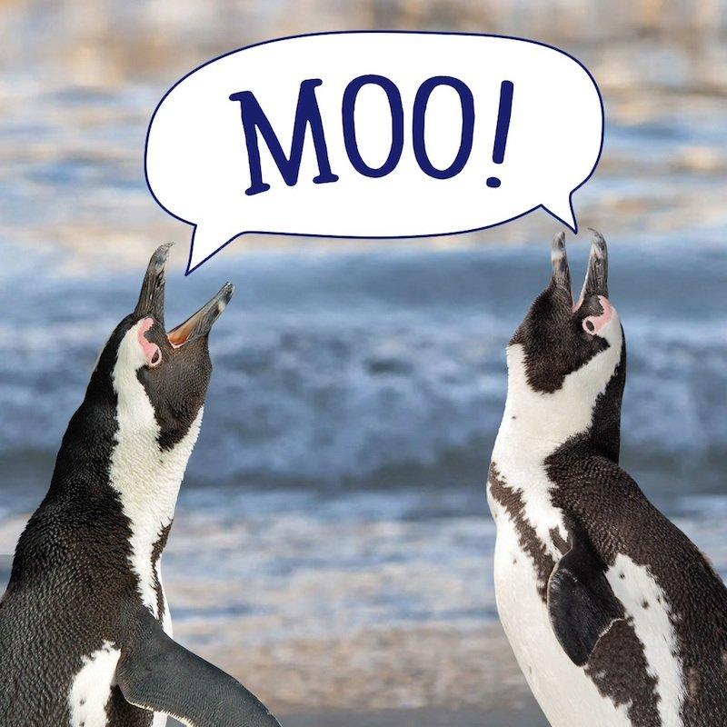 sf-yokids-world-penguin-day-1080x1080-final